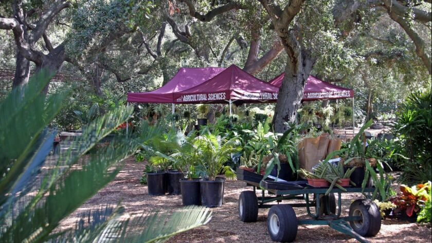 Descanso Gardens is hosting the region's first fall plant sale, with plants grown by Mt. San Antonio College's horticulture program.