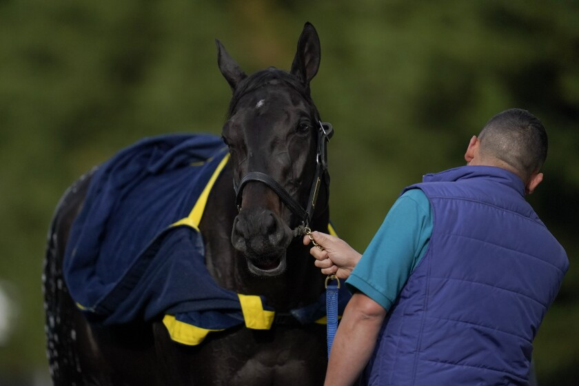 Kentucky Derby winner Medina Spirit is bathed after a workout May 12, 2021, ahead of the Preakness Stakes.