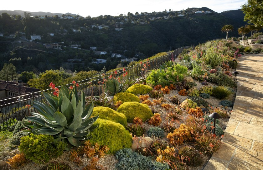 This water-saving hilltop yard in Brentwood, with buried cisterns for collecting water, quilted mounds of colorful succulents and a meadow of native grasses, was featured in the 2019 Assn. of Professional Landscape Designers' SEE (Succulent Edible Ethical) Garden Tour.