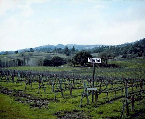 Boccie and wine in Northern California wine country