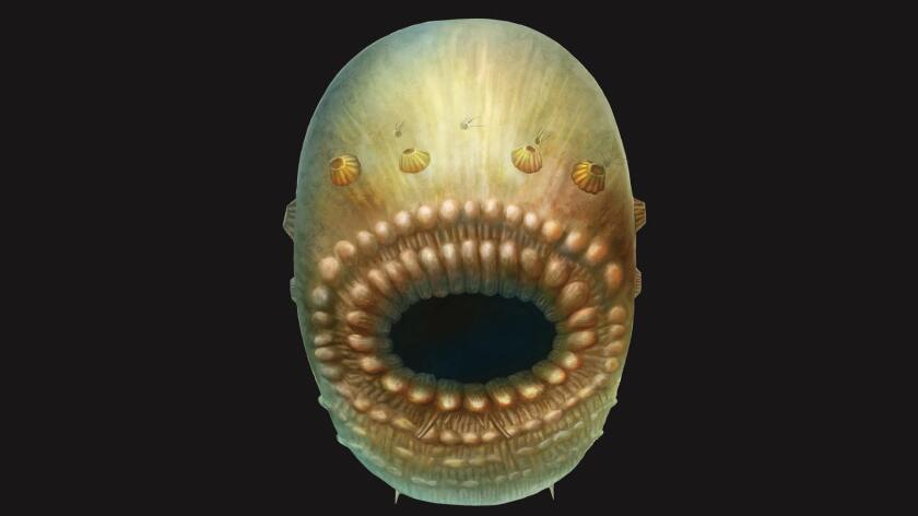 An artist's impression of Saccorhytus, a microscopic, bag-like sea creature that lived about 540 million years ago. It is the oldest known ancestor of humans.