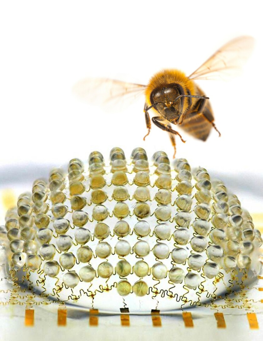 Scientists have built a digital camera with a hemispherical, compound design inspired by eyes found in the insect world, according to a new paper in Nature.
