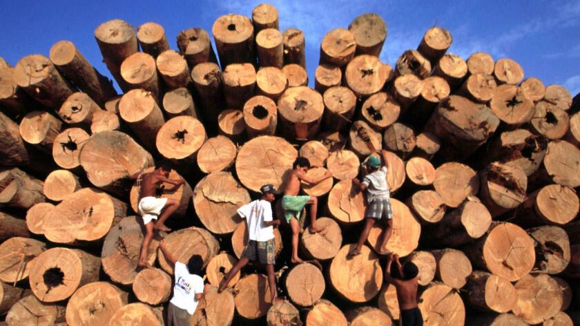Children play around a pile of lumber from the Amazon rainforest.