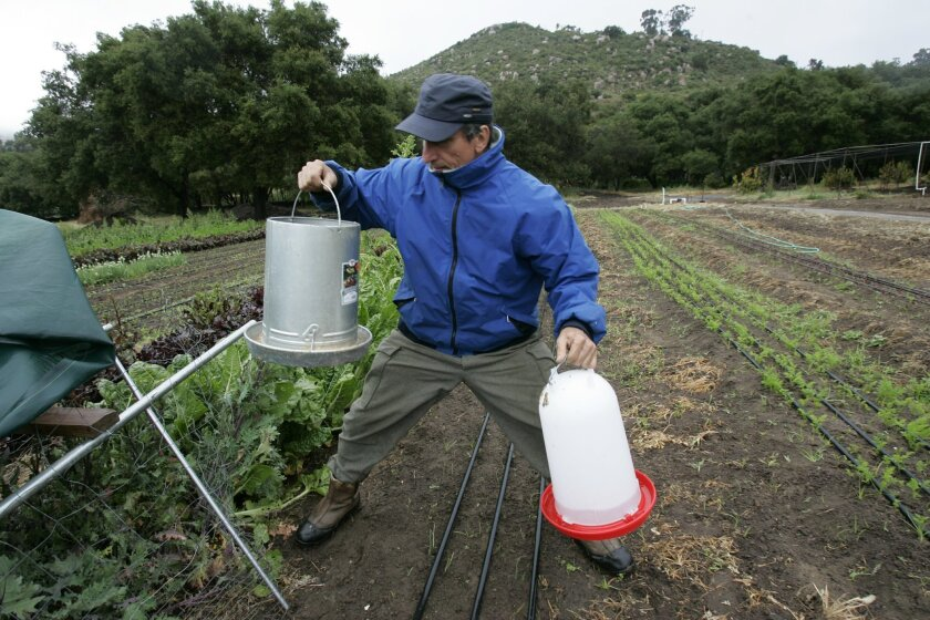 Mil Krecu, the manager of Stone Farm, oversees 18-plus acres that will supply organic produce for Stone's restaurants in Escondido and Point Loma.
