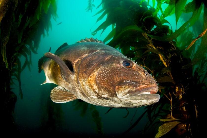 sd-no-marine-biodiversity