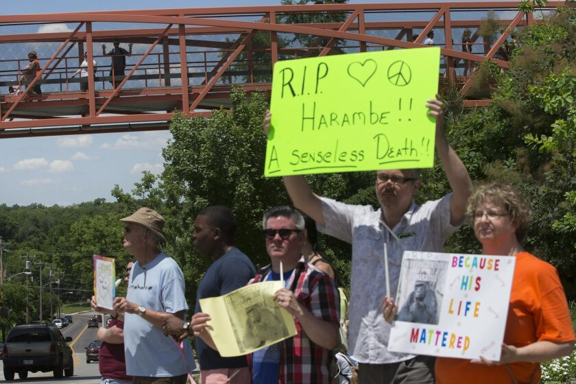 Zoo visitors look at protestors and mourners from a walk bridge during a vigil for the gorilla Harambe outside the Cincinnati Zoo & Botanical Garden, Monday, May 30, 2016, in Cincinnati. Harambe was killed Saturday at the Cincinnati Zoo after a 4-year-old boy slipped into an exhibit and a special z