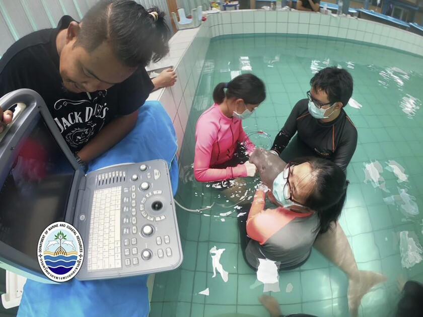 Young dugong dies in Thailand in blow for vulnerable species