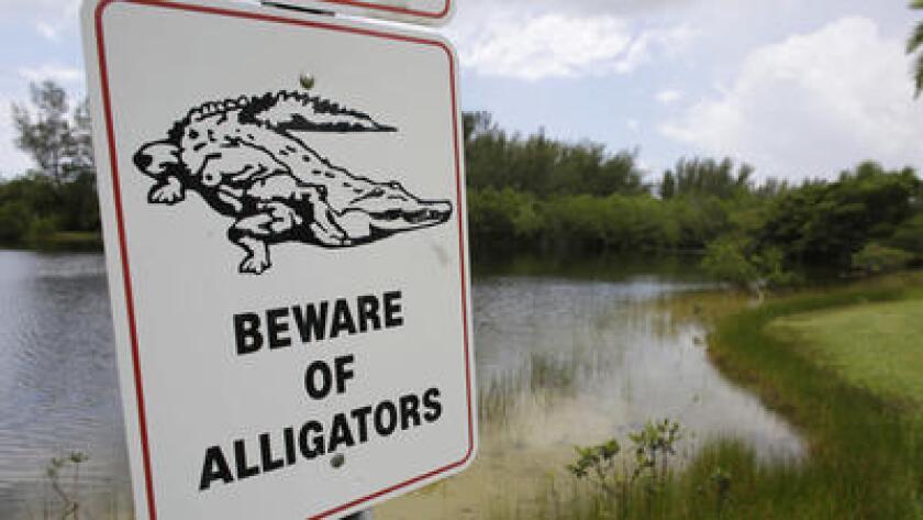 Un cartel colocado junto a un pequeño lago en el Matheson Hammock Park advierte de posibles caimanes el miércoles 15 de junio. Un cocodrilo atacó a una mujer en el río Econlockhatchee el viernes 8 de julio de 2016. (Lynne Sladky)