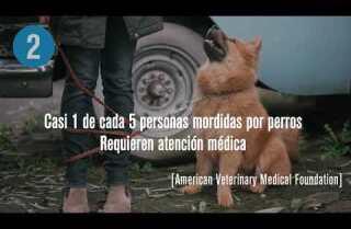 Lesiones por mordedura de perro en EE.UU.