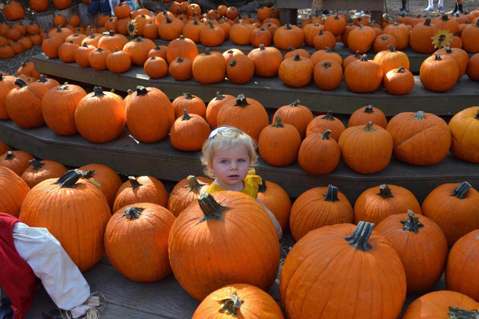 It's the great pumpkin patch, Newport Beach