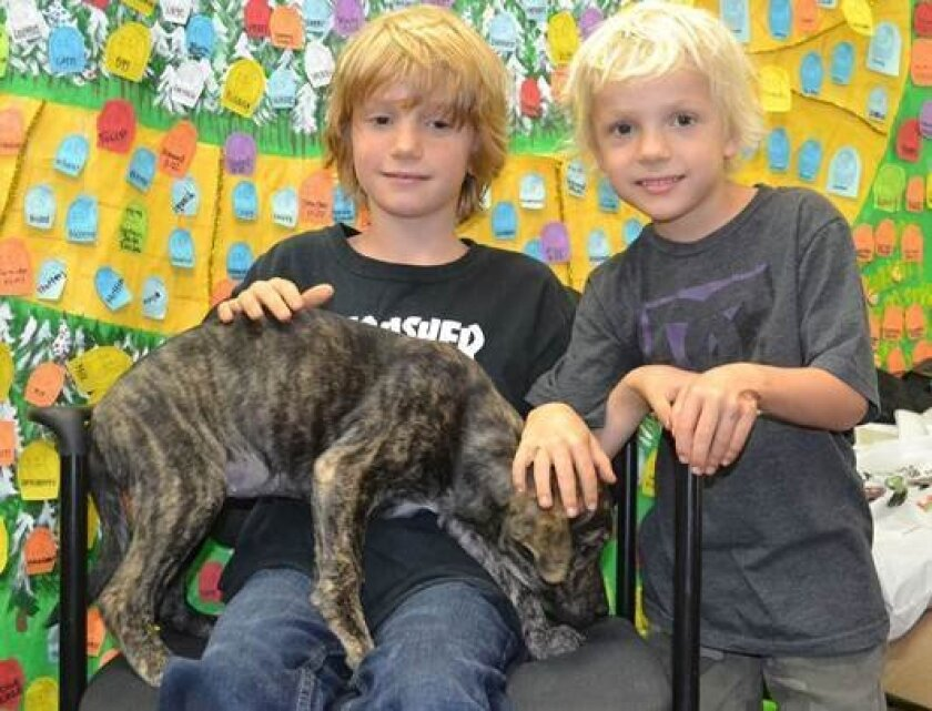 Helen Woodward Animal Center pup Dasher finds her forever home with the Saxten family through the generosity of an anonymous angel. Jonah, Dasher and Wyatt.
