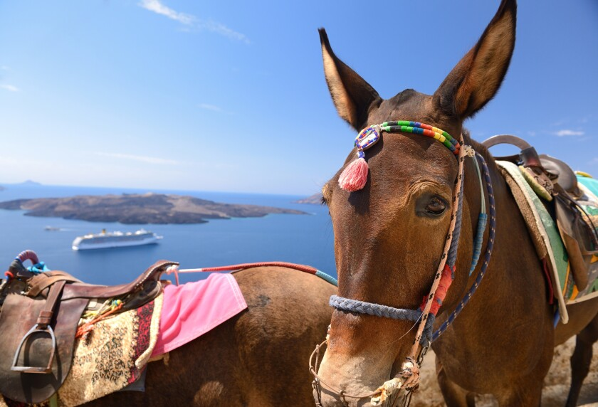 Donkeys wait for tourists to take them up steps on Greek island of Santorini in this undated photo.
