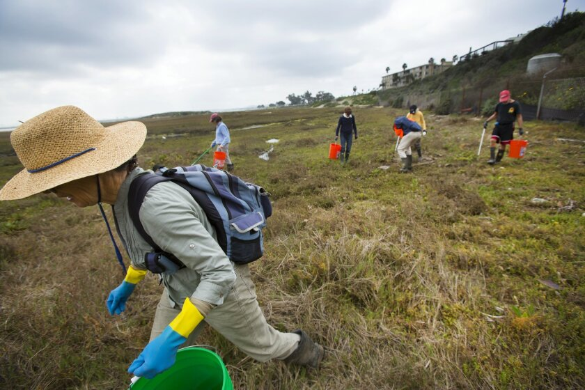 Kay Stewart picked up trash at the Kendall-Frost Marsh Reserve in Pacific Beach in 2016.