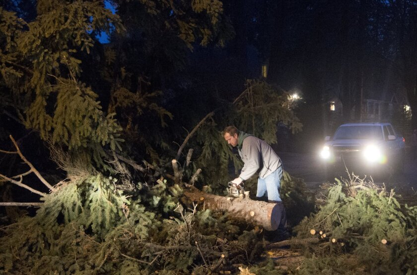 Cameron Napora, a contractor, stops to cut a large tree that was blocking the road during a windstorm that swept through Spokane, Wash. on Tuesday.