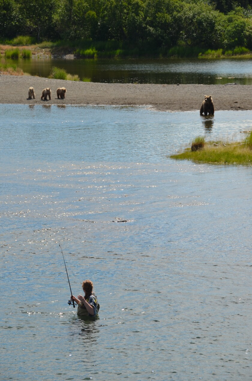 Bear, cubs, fishing at Katmai National Park and Preserve, Alaska