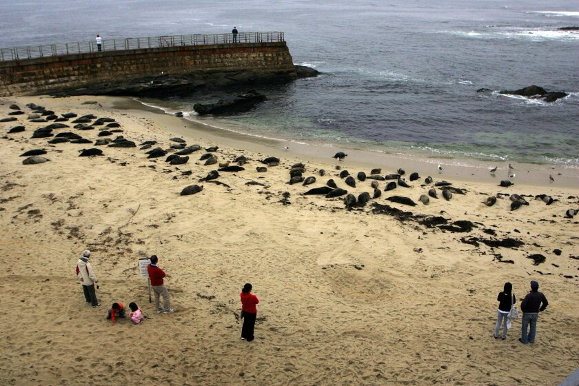 Beach goers stand behind a rope barrier as they observe the harbor seals at the Children's Pool on Wednesday in La Jolla.
