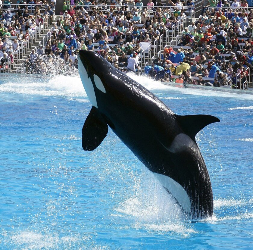 SeaWorld San Diego, which once planned a $100 million expansion of its killer whale habitat, tells the Coastal Commission it's formally canceling the project.
