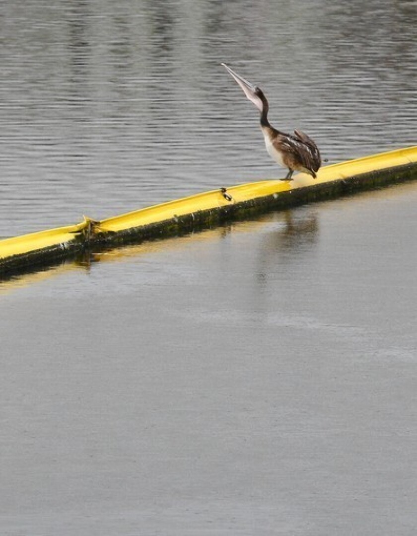 High cost of fighting urban runoff examined in report