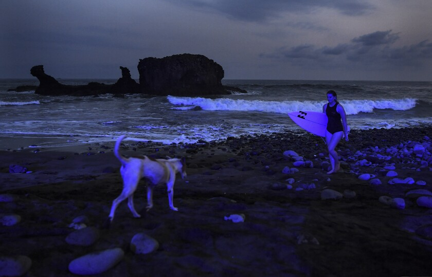 A surfer walking out of the water and a dog on the beach at dusk.