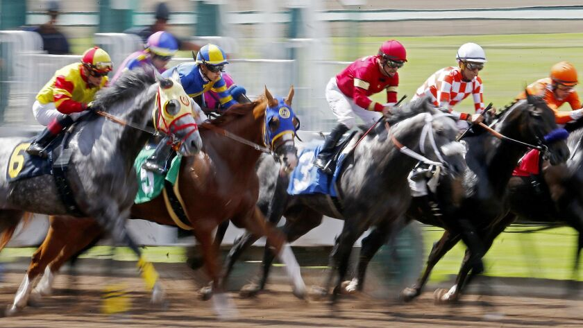 Horses and jockeys charge out of the starting gate.