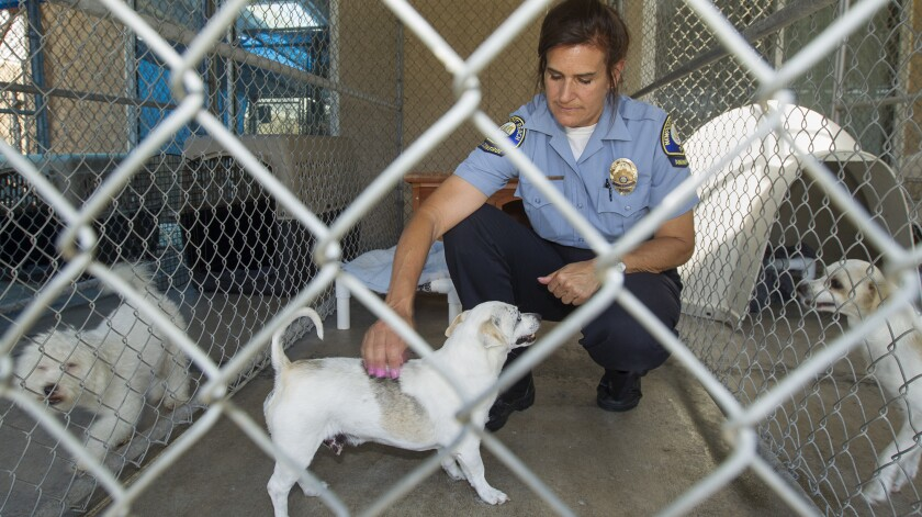 Valerie Schomburg, Animal Control supervisor, plays with Stanley, an 8-year-old Chihuahua mix, at Ne
