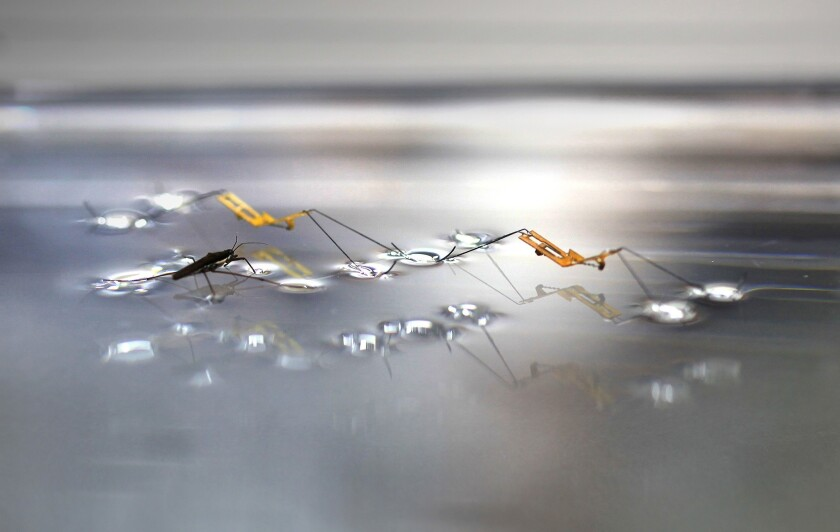 An international team of researchers has designed a water-striding robot that can jump on water.
