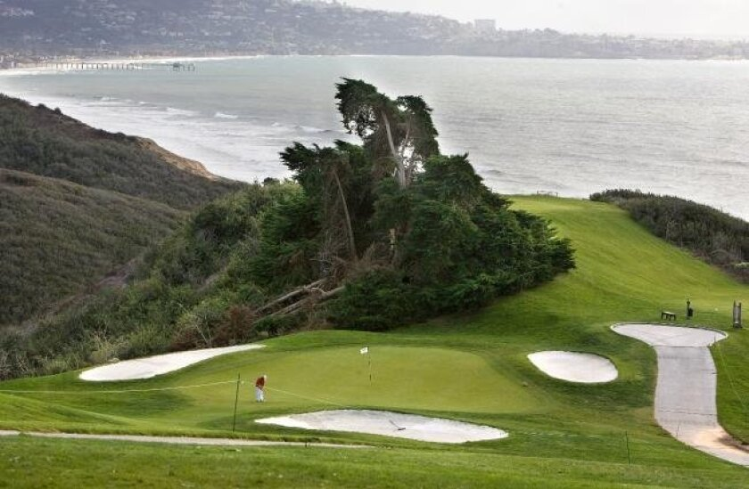 The landmark Monterey cypress behind the sixth hole on the North Course at Torrey Pines.