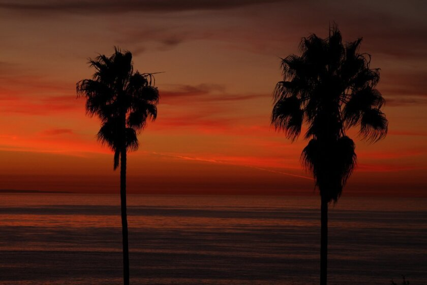 Tall fan palms silhouetted against a blazing sunset in La Jolla. Jeremy W Smith photo
