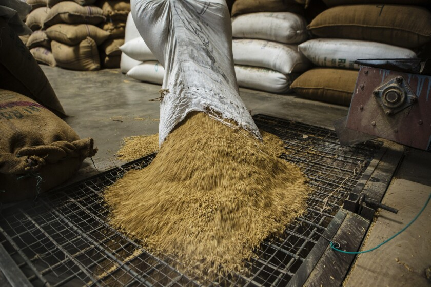 A worker pours a bag of rice grain into a dehusking machine at the KRK Modern Rice Mill India.