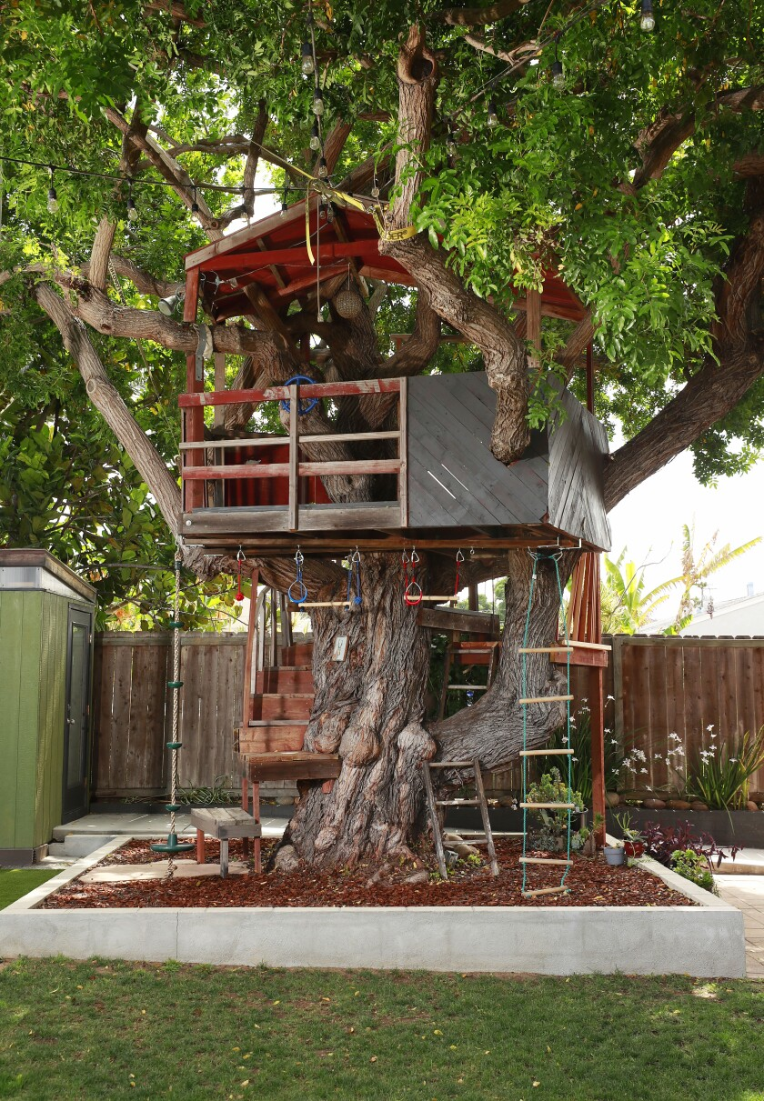 The large, shady Brazilian pepper tree was a selling point when Taylor and Metcalf bought the house.