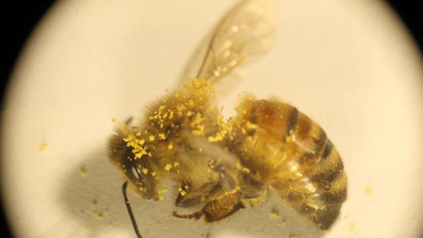 La limpieza y las abejas