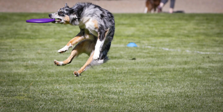K9  Frisbee Toss & Fetch Worldwide Championship 2019