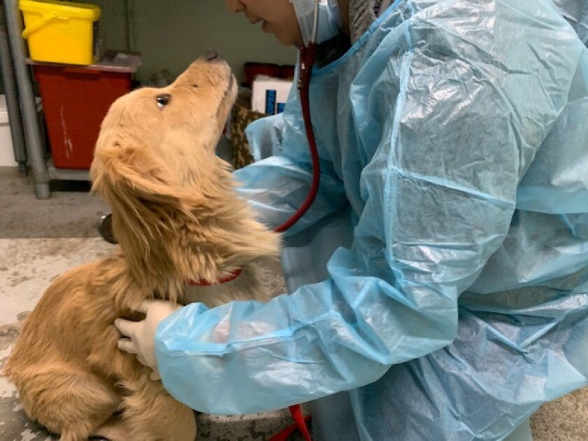 """Animal rescuers removed 21 dogs found living in """"deplorable conditions"""" from a home in Ontario, according to an animal welfare group."""