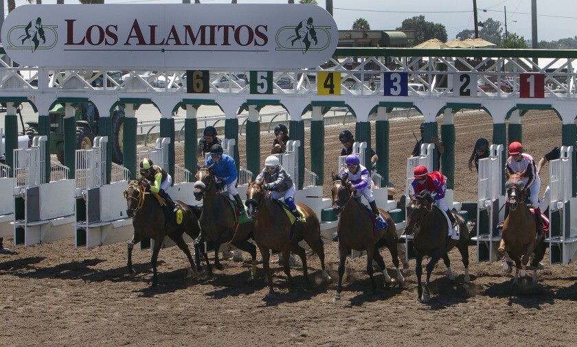 Thoroughbred horses bolt from the starting gate at Los Alamitos Race Course.