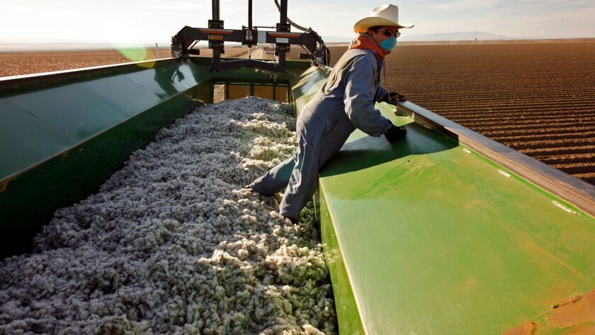 """Martine Ledesma operates a """"crustbuster"""" that compresses cotton into giant modules for handling at the Stone Land Company in Stratford, Calif."""