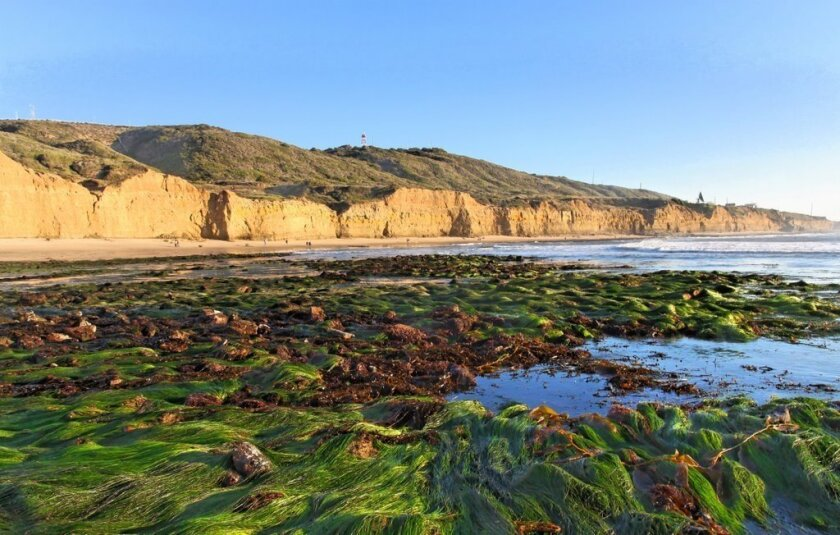 Take 2: Inspiring tide pool images