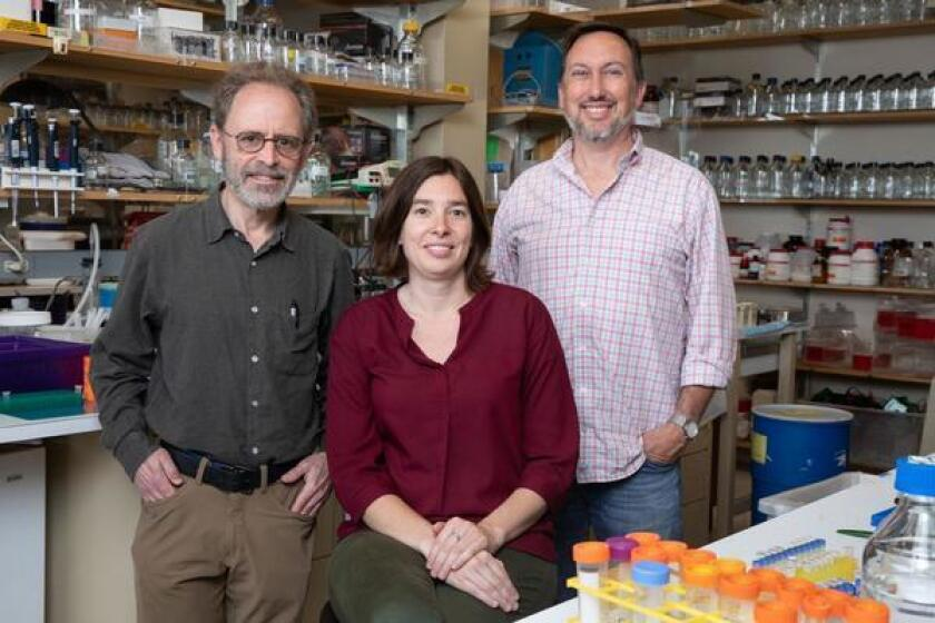 Salk Institute researchers Marc Montminy, Laura Rodon and Reuben Shaw authored a study that might lead to better treatment options for lung cancer patients.
