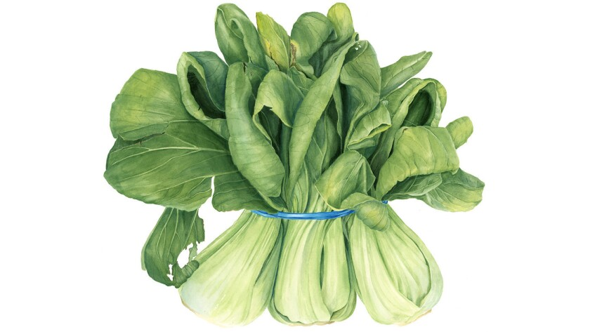 Bok choy in watercolor and pencil by botanical artist Sally Jacobs.