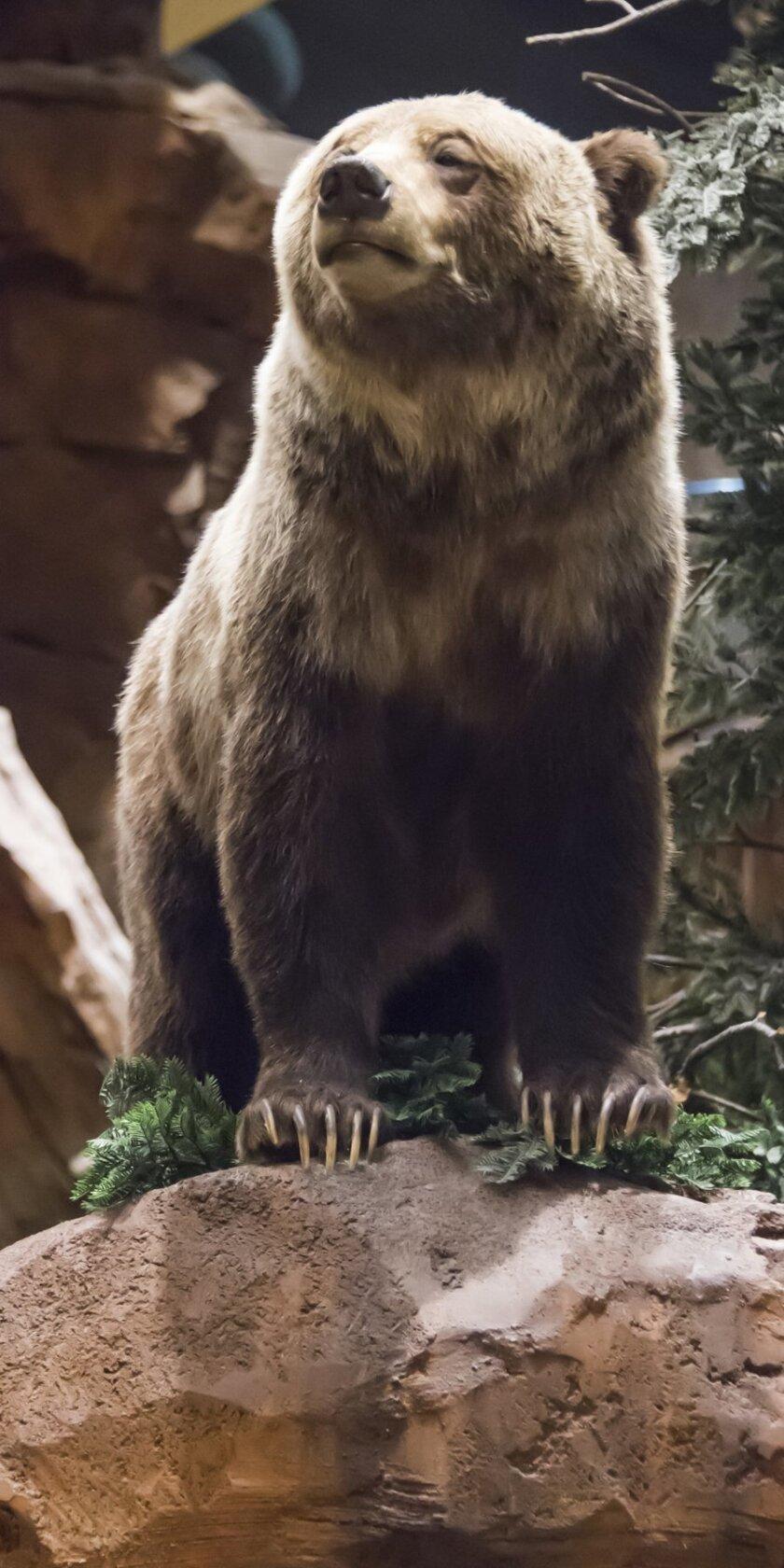Bear in Outdoor World.