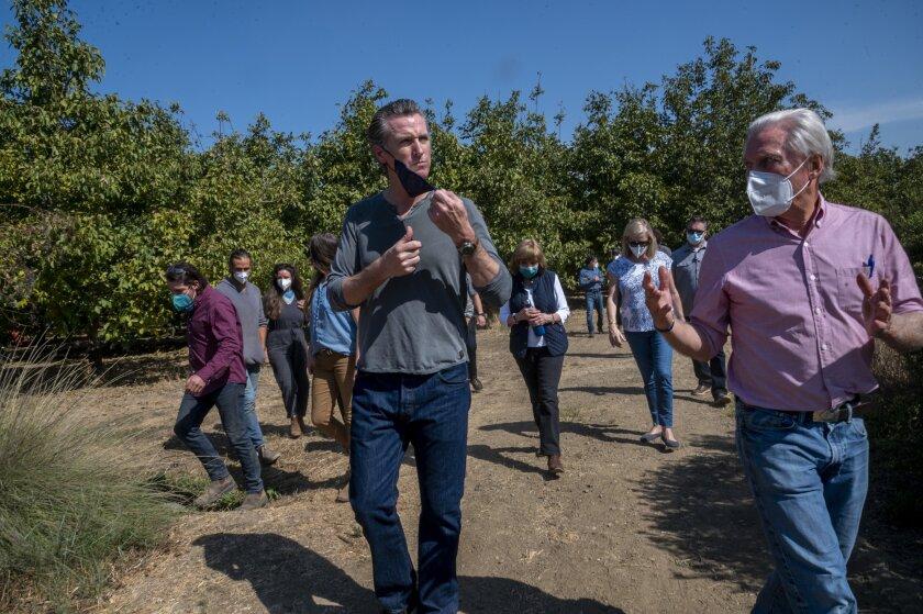 California Gov. Gavin Newsom tours Sierra Orchards walnut farm