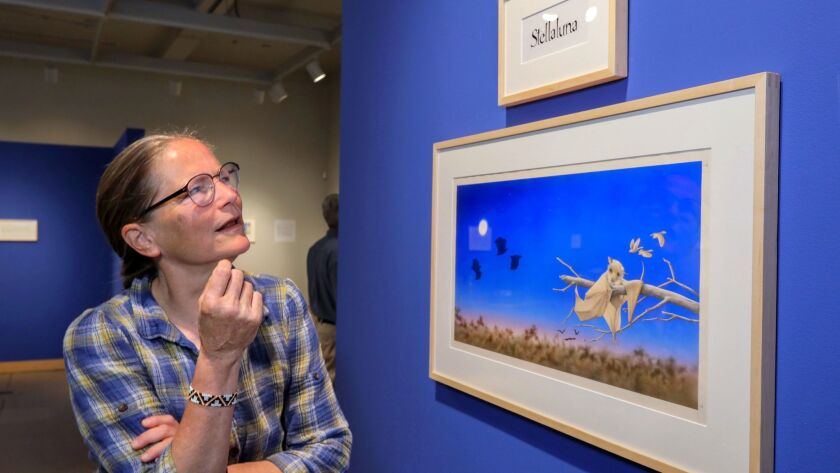 """Portrait of artist Janell Cannon at Carlsbad Library's gallery with """"Stellaluna"""" she created in 1992 that's the cover of her best selling children's book of the same name."""
