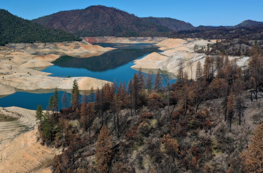 Trees burned by the recent Bear Fire line the steep banks of Lake Oroville, where water levels are extremely low.