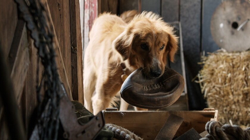 "Josh Gad voices the dog in the film ""A Dog's Purpose."" Credit: Universal Pictures"