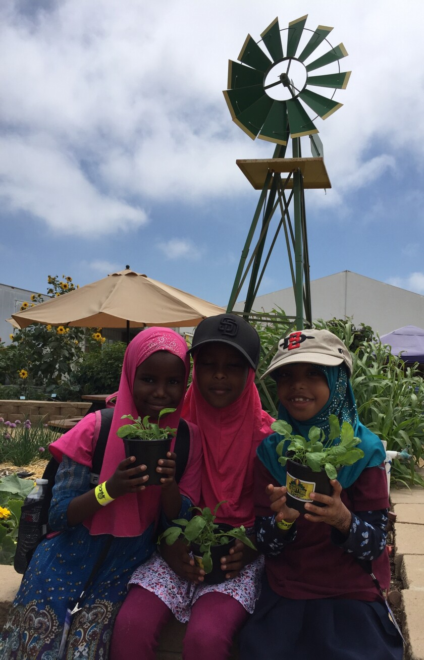 First-graders Ekra Ali, Nusayba Adan and Asma Aden of Iftin Charter School in San Diego hold their prize-winning radish plants.