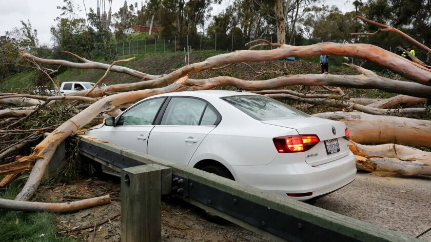 A very tall Eucalyptus tree fell across northbound lanes of SR-163. The female driver was not hurt.