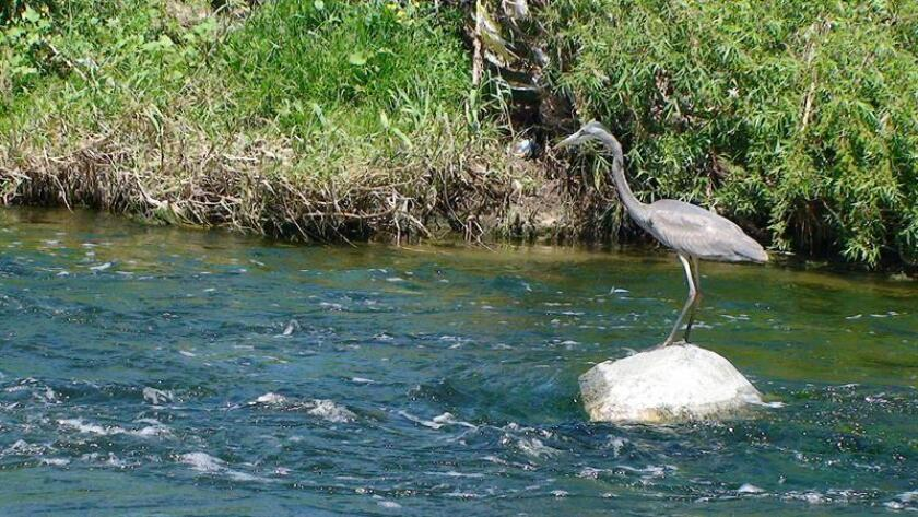 La Junta de Recursos de Agua de Utah está estudiando un pedido de Colorado para que aguas del río Verde, que atraviesa Utah, sea enviada al otro estado por la falta del preciado líquido, según trascendió hoy. EFE/Archivo
