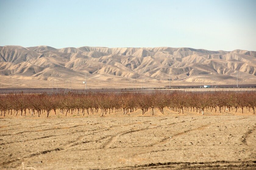Dry fields and bare trees in California's drought-stricken Central Valley.