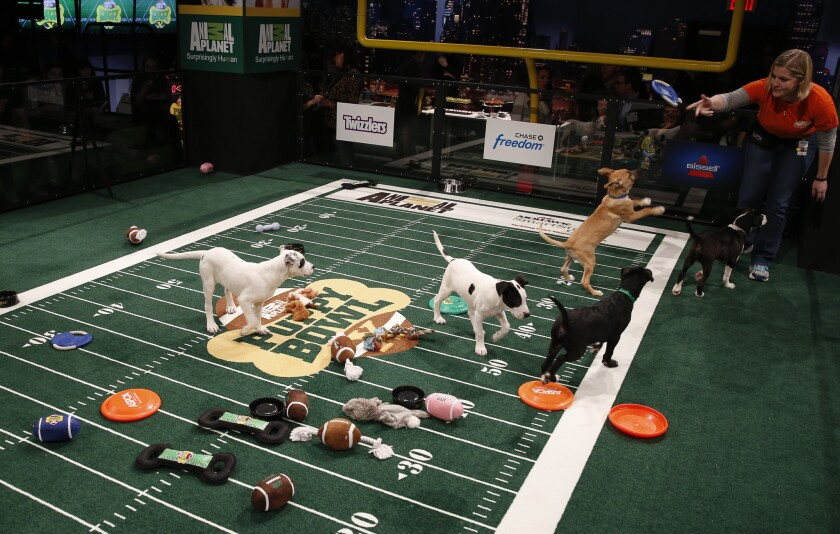 """The atmosphere at """"Puppy Bowl X"""" at the Discovery Times Square Experience in New York on Jan. 28, 2014."""