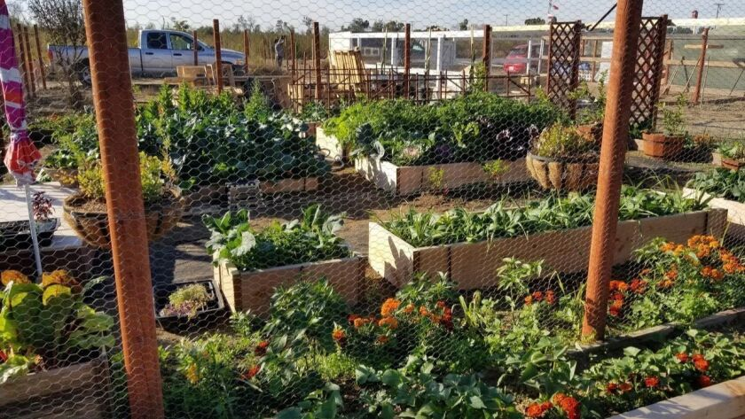 Gardens at the Tijuana River Valley Community Garden.