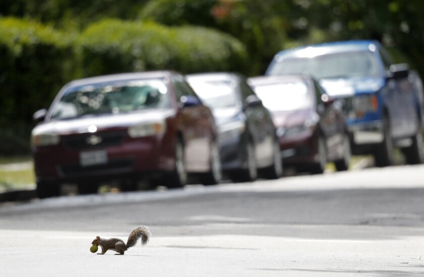 A squirrel is seen in a file photo.